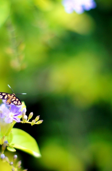 Butterflies-And-Me.jpg