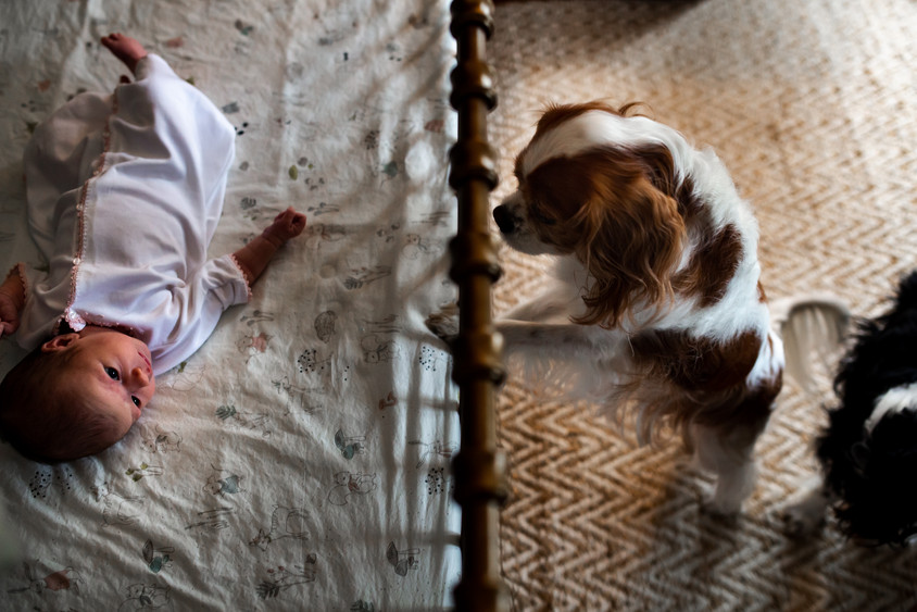 dog looking through the crib at newborn baby