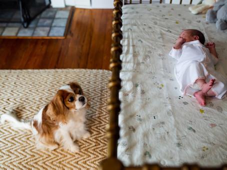 In Home newborn photography | Decatur