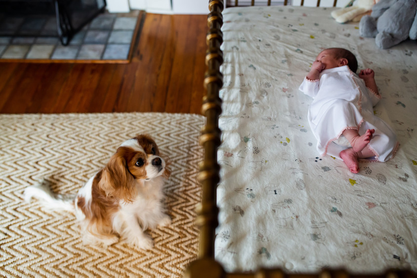 dog looking at newborn in crib