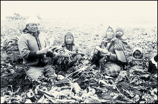 Cree women and children working on a farm
