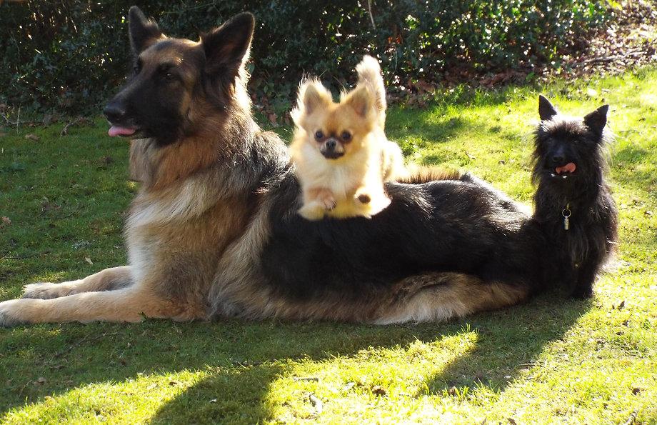 Amys Gentle Dog training