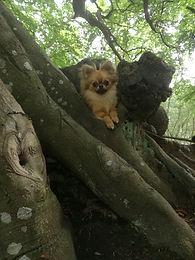 tree dog.jpg