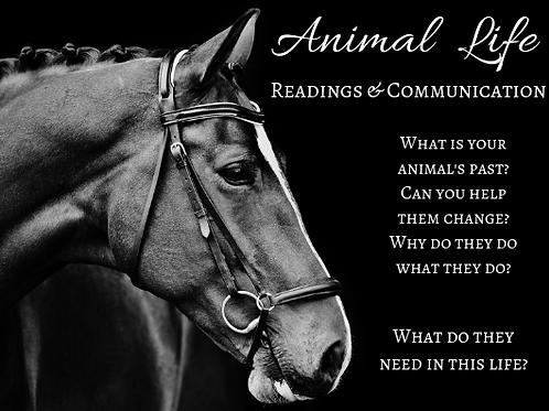 Animal LIFE Communication