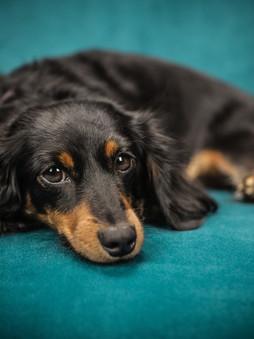 teal dog.jpg