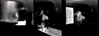 shapeshifting-nava waxman - sequence.jpg