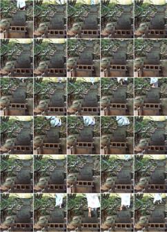 nava-waxman-cicada-intervals.jpg