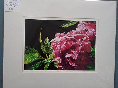 Pink Flowers - Charlotte Iggulden