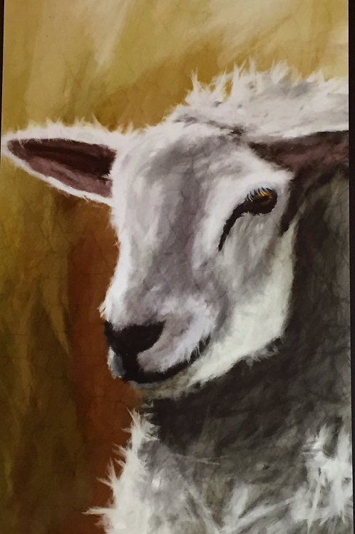 Limited Edition Sheep Print