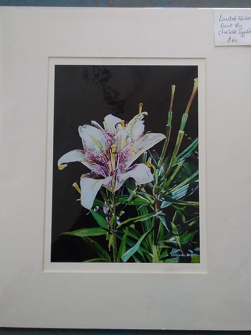 White Flower - Charlotte Iggulden