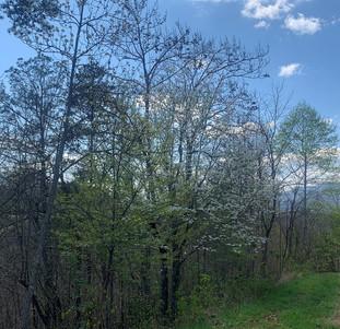 lot 59 trees.jpg