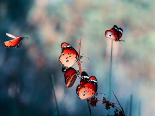 Kelebeğin öyküsü