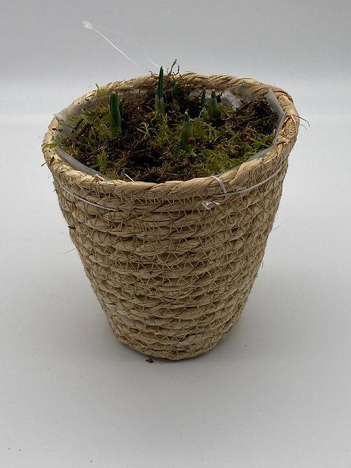 Single Spring Basket