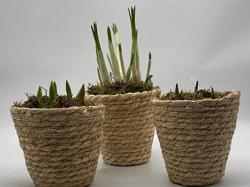 Trio of Spring Baskets