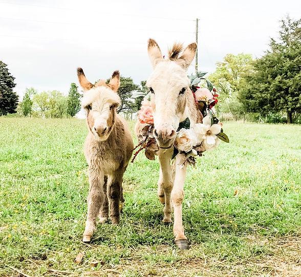 Donkey%2520flower%25201_edited_edited.jpg