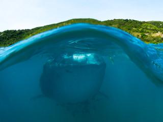 מתפלפים בפיליפינים! חלק שני - אוסלוב וסומילון, כרישי לווייתן וריף מרהיב