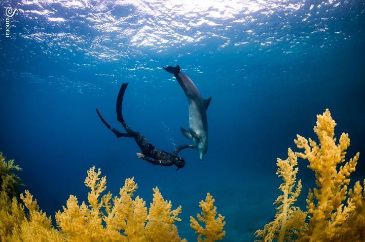 צולל ודולפין מבעד למסך של אלמוגים, צילום: בועז סמוראי