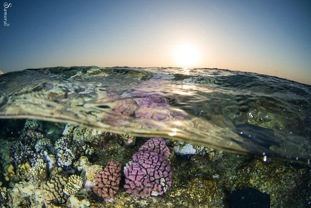 שונית אלמוגים על רקע שקיעה. צילום: בועז סמוראי