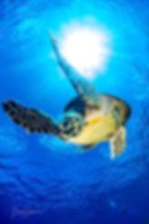 Red Sea Boaz Samorai (18).jpg