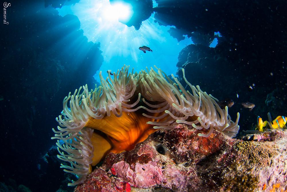 מערות האלמוגים של ריף סנט ג'ונס. צילום: בועז סמוראי
