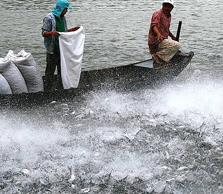 Giá nguyên liệu tăng: Sức cạnh tranh của thủy sản giảm