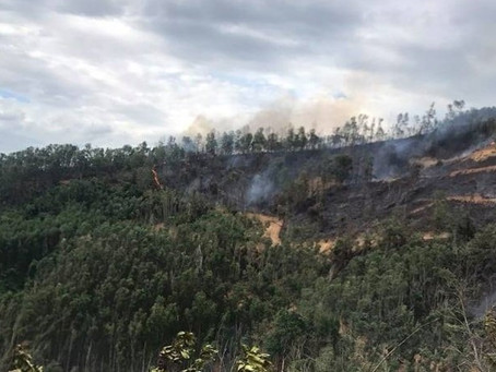 Tham gia dập cháy rừng, một người đàn ông ở Quảng Nam tử vong