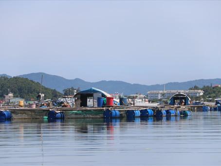 """Đà Nẵng: Cảng cá và chợ """"đóng cửa"""", người nuôi cá lồng bè gặp khó khăn"""