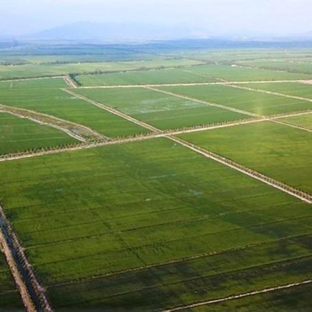 Xuất khẩu gạo có thể gặp khó khăn trong thời gian tới