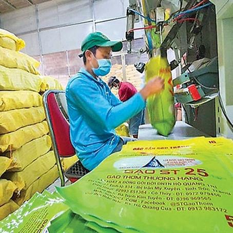 Đăng ký thương hiệu gạo ST25 tại thị trường Mỹ: Doanh nghiệp Việt đừng để chậm chân