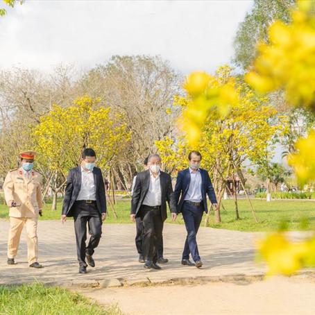 CT Thừa Thiên Huế: Hy vọng 10 năm nữa mai vàng Huế sẽ nổi tiếng như hoa anh đào của Nhật Bản