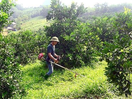 Ngành nông nghiệp: Nguy cơ tai nạn lao động & bệnh nghề nghiệp không nhỏ