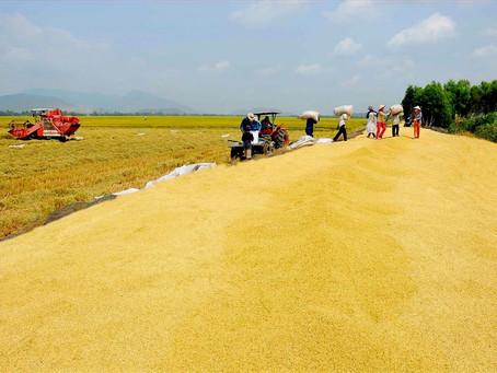 """Để gạo Việt """"vươn ra biển lớn"""", phải bắt đầu từ việc thay đổi tư duy cũ về """"an ninh lương thực"""""""
