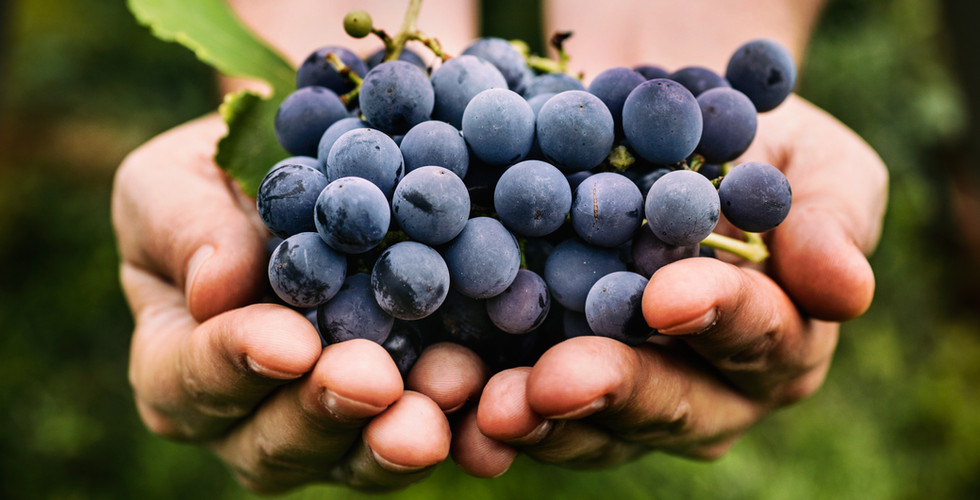 Original grapes hand held