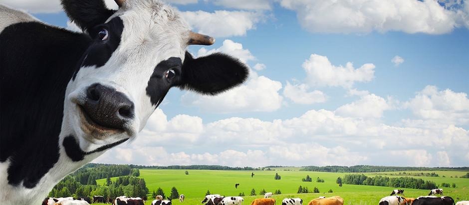 ¡Conviértete en un asesino de vacas!