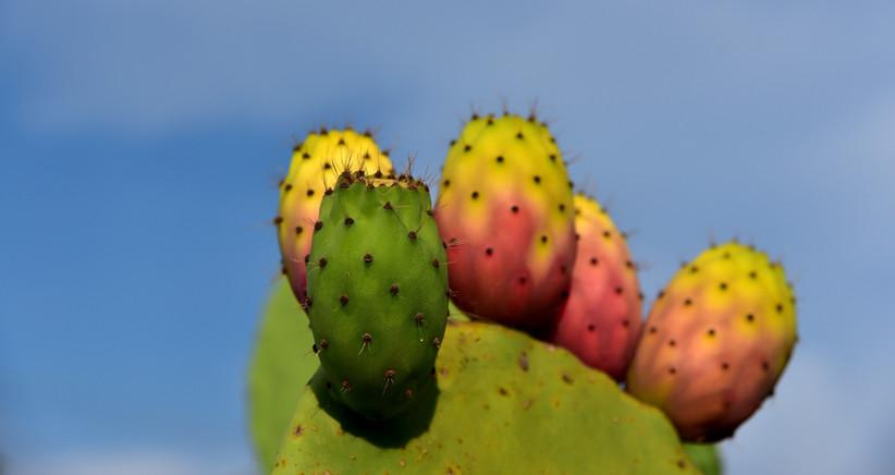 cactus-3622543_1920.jpg