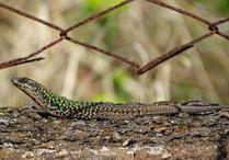 reptile-4894879_1920.jpg