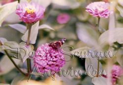 Atalanta Kelebeği. Sene 1983