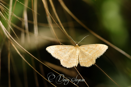 Gece kelebeği