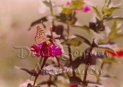Bahadır Kelebeği. Sene 1983