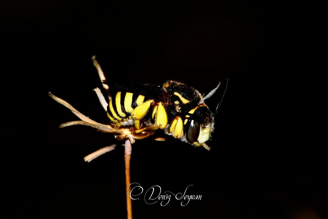 Hava kararınca - Böceklerin gece yaşamı