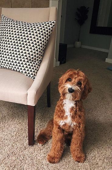 Bruno chair.jpg