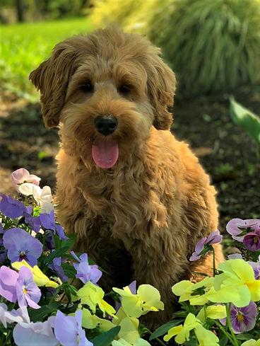 Petunia Posy.jpg
