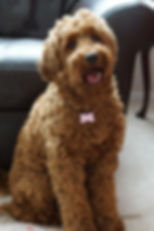 Ginger one year.JPG
