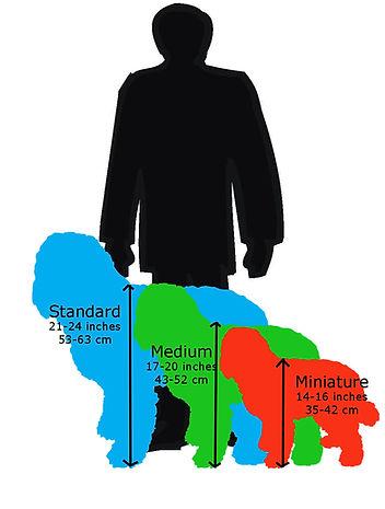 labradoodle size diagram[1].jpg