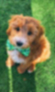 Bruno 10 weeks.jpg