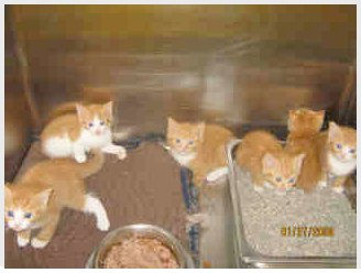 six kittens turned into animal shelter