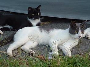 two cats lying next to one another