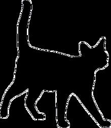 silhouette of kitten walking towards you