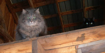 two barn cats who have taken shelter inside