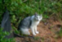 community cat near some bushes